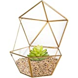 HOMEIDEAS Modern Geometric Terrarium Metal Faceted Tabletop Succulent Plants Holder Glass Air Plant Holder 6.9 x 6.9 x 6.3 Inches(Gloden)