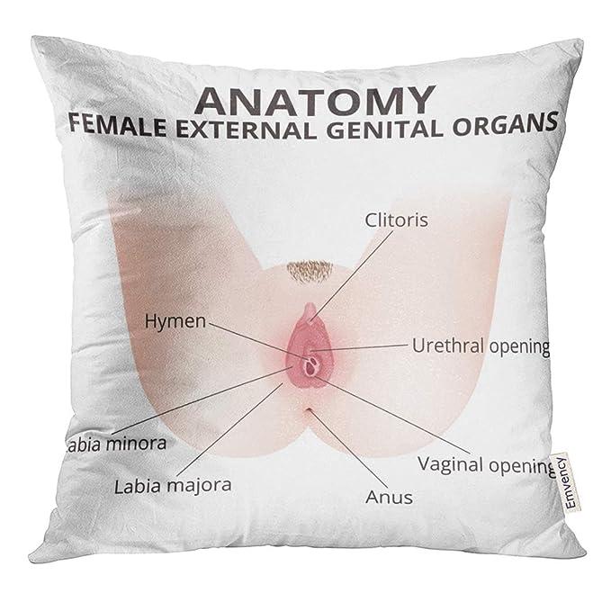 Vagina hymen pic