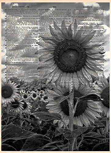 Amazoncom Black And White Sunflower Artwork Printed On Vintage
