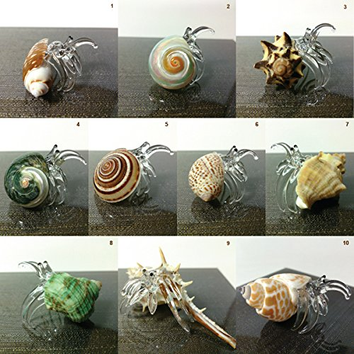Sansukjai Sea Shell Set 10 Seashell Hermit Crab Conch Figurines Beach Animals Hand Blown Glass Art Natural Collectible Gift Decorate