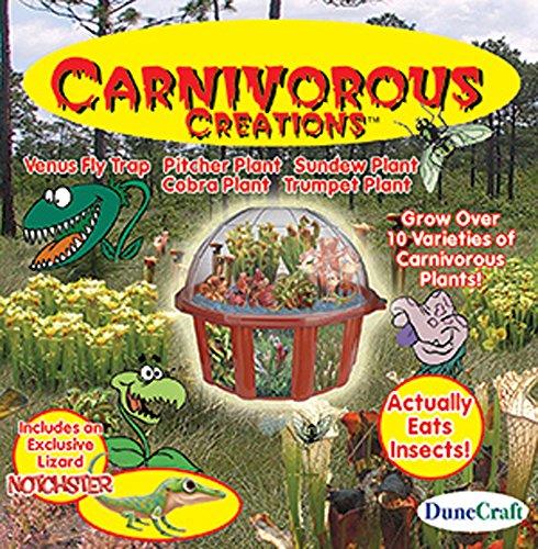 Carnivorous Creations Dome Terrarium Uk Carnivorous Creations Terrarium Kit