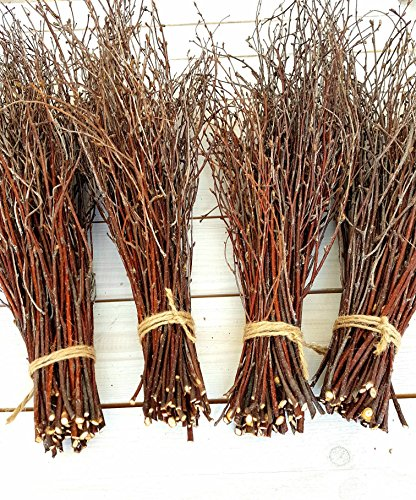 200pcs. Birch branches, Natural Birch Twigs, Birch branches centerpieces, Decorative Birch, birch branches for crafts, Set of 4 bundles