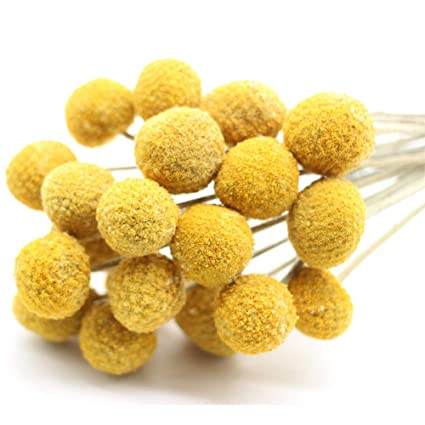 Amazon 2018 summer new arrival tyoungg dried craspedia yellow 2018 summer new arrival tyoungg dried craspedia yellow billy balls dried flowers for wedding bouquet decor mightylinksfo