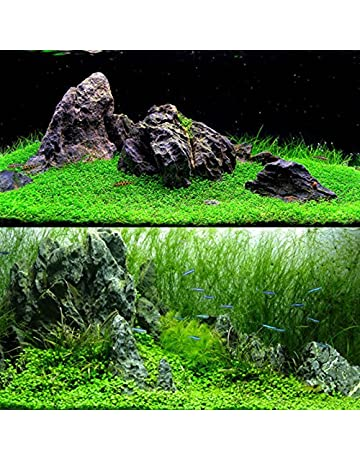 TOPmountain Decoración de Semillas de Hierba de Agua 1000 unids/Bolsa Semillas de Plantas de