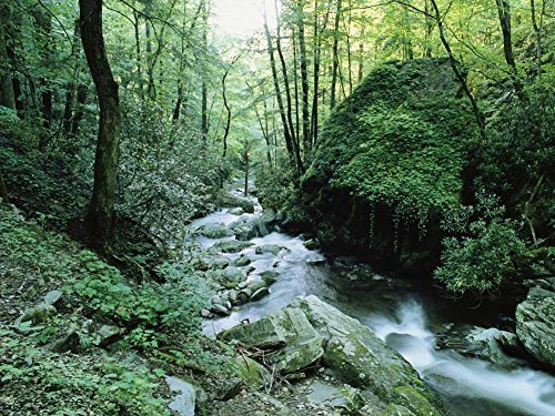 Smoky Mountain National Park Pictures - 5