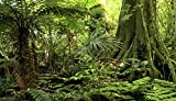 Reptile Habitat Background; Rain Forest, for 24x18x36 Terrarium, 3-sided Wraparound