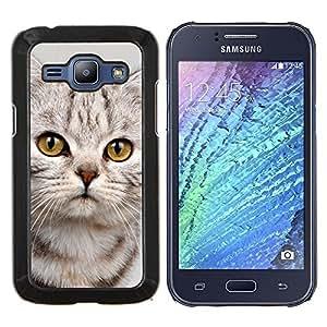 TECHCASE---Cubierta de la caja de protección para la piel dura ** Samsung Galaxy J1 J100 ** --Gatito triste lindo del gato del gatito peludo Beige