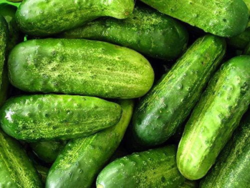 30+ ORGANICALLY Grown Wisconsin SMR-58 Pickling Cucumber Seeds, Heirloom Non-GMO, Crispy and Sweet, Fragrant and Delicious, Tender Pickling, from USA