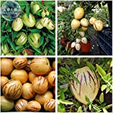 2018 Hot Sale!! Maslin Solanum Muricatum Sweet Cucumber Seeds, Professional Pack, Pepino Dulce Melon pear Edible Fruits BD078H