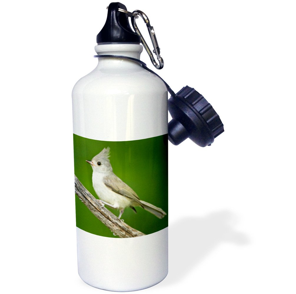 3dRose Use Tufted Titmouse, Baeolophus Bicolor, Perched, Texas, USA-Sports Water Bottle, 21oz (wb_191297_1), Multicolored