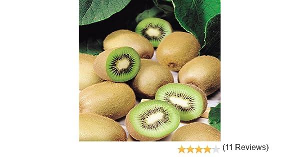 Self fértil Kiwi deliciosa Jenny: Amazon.es: Jardín