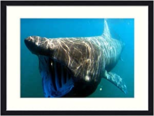 Wall Art Print Wood Framed Home Decor Picture Artwork(24x16 inch) - Sea Ocean Water Underwater Swimming Basking Shark