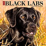 Just Black Labs 2017 Wall Calendar (Dog Breed Calendars)