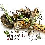 エアープランツ チランジア ミニサイズ アソート4種セット 【サイズ4~10cm前後】エアプランツ
