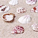 Kissitty 500 Grams Dyed Scallop Beach Sea Shell Beads with Holes 1.53~1.77'' (39~45mm) Length for DIY Jewelry Making Art Craft Projects-Bag of Approx. 90pcs