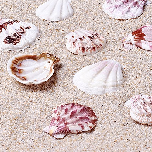 Kissitty 500 Grams Dyed Scallop Beach Sea Shell Beads with Holes 1.53~1.77