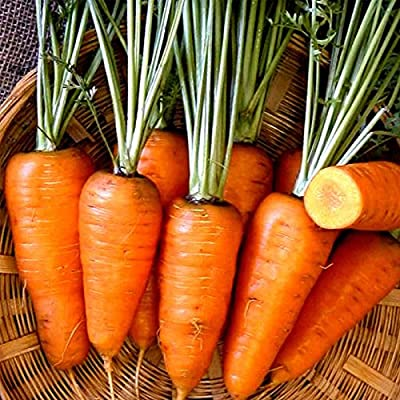 Chantenay Red Core Carrot Seeds - Non-GMO, Heirloom Vegetable Garden Seeds - Gardening, Microgreens