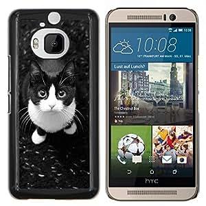 Americano lindo gato de pelo corto Housecat- Metal de aluminio y de plástico duro Caja del teléfono - Negro - HTC One M9+ / M9 Plus (Not M9)