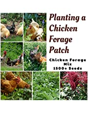Chicken Forage Mix 1500+ Seeds Grow Your OWN Spring Summer Autumn Healthy CHOOKS