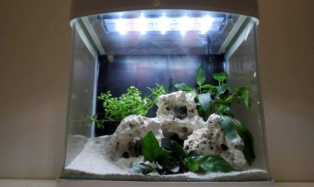 XCUBE - Nanoacuario completo en color blanco con iluminación LED, luz nocturna y filtro: Amazon.es: Productos para mascotas