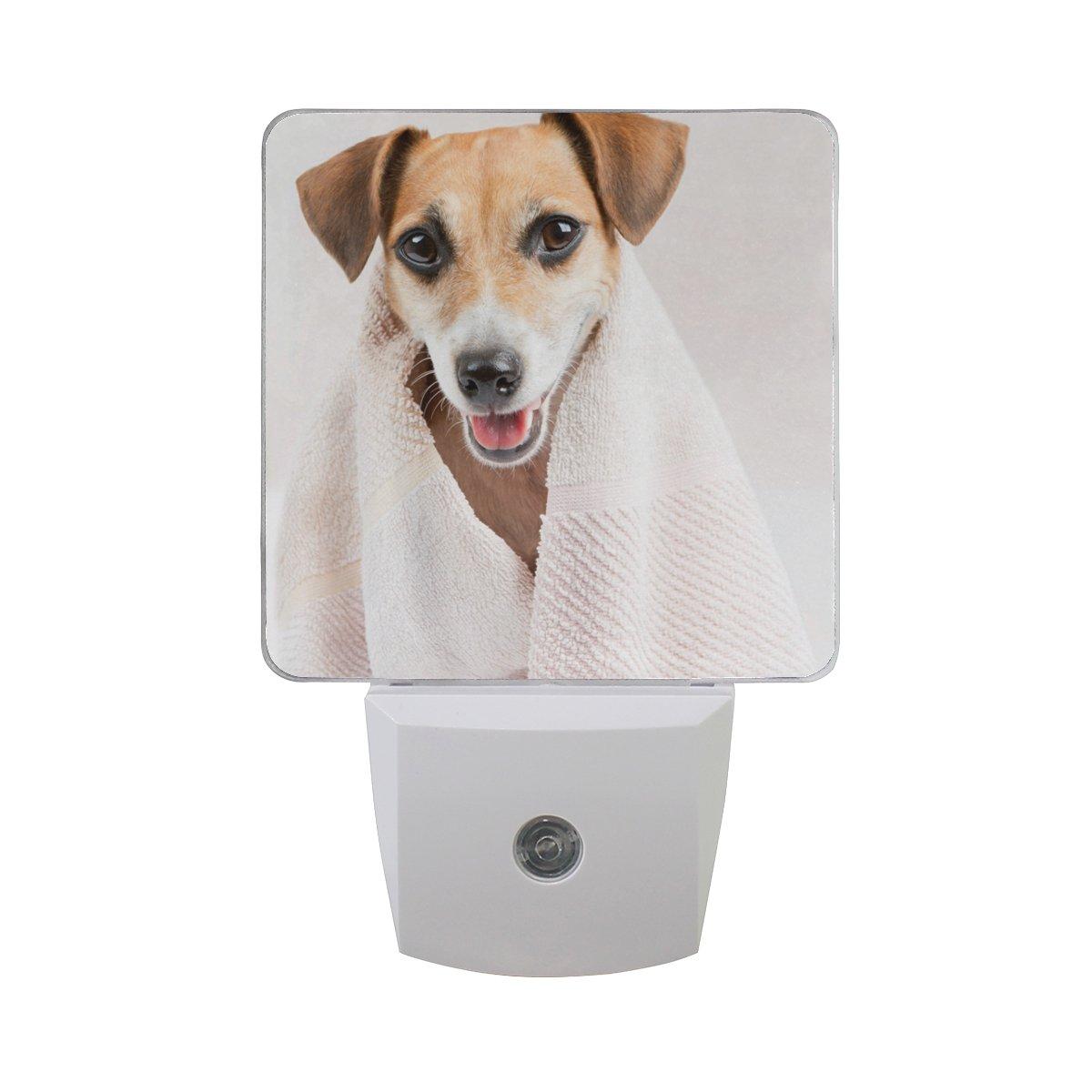 Plug-in LED Night Light Lamp Clean Pet Spa Printing with Dusk to Dawn Sensor for Bedroom, Bathroom, Hallway, Stairways, 2 Pack-0.5W