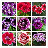 30pcs / bag,Gloxinia seeds, potted seed, flower seed, variety complete Bonsai Potted Plant Sinningia Speciosa Benth Seeds