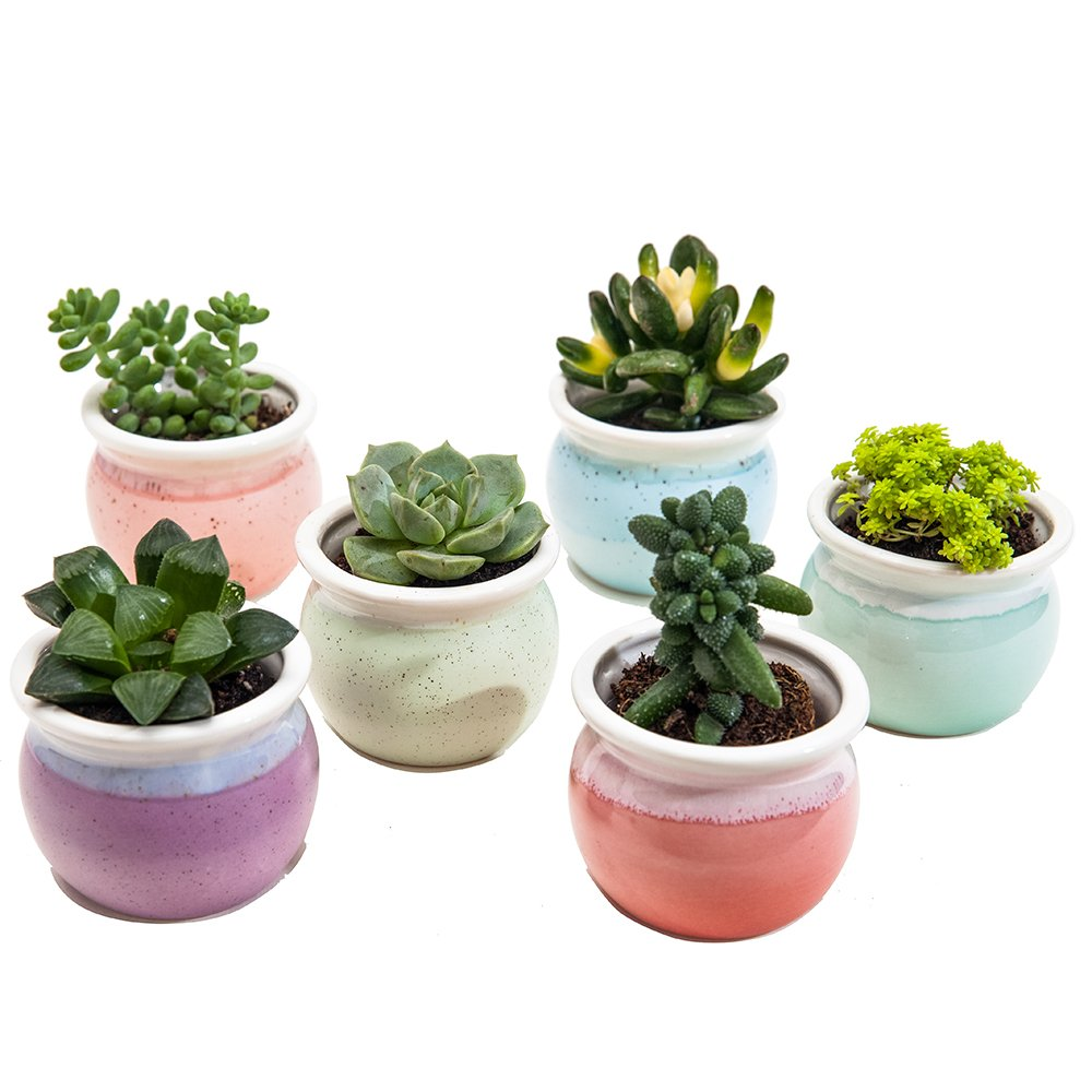 SUN-E 3 Inch Concise Style Container Bonsai Planters Ceramic Flowing Glaze Base Serial Set Six Color Succulent Planter Pot Cactus Plant Pot Flower Pot Window Box with Hole(6 in Set) 004-TFTC-3Inch6CaiP
