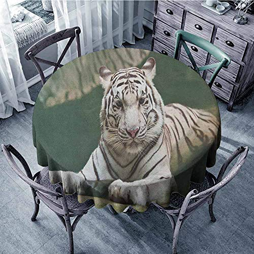 ScottDecor Food Round Tablecloth Fabric Tablecloth Tiger,Bengal Symbol Swimming White Beast with Black Sprites Large Cat Animals Having Fun, Teal White Diameter 60