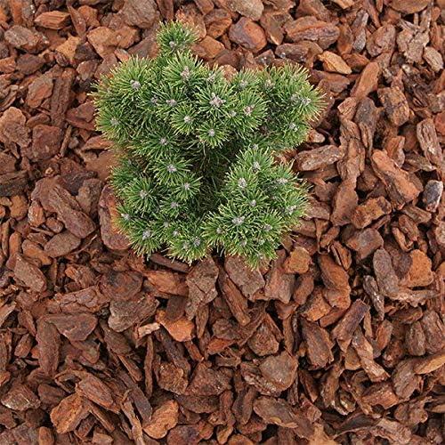 MammutGarten Ribete de Pino, Corteza de Pino, para jardín, 40-60 mm, Saco de 70 l x 18 Unidades (1260 L): Amazon.es: Jardín