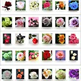 30 kinds Multi-color Total 300 seeds colorful rose flower seeds rare rainbow rose flower seeds Plant Home Garden