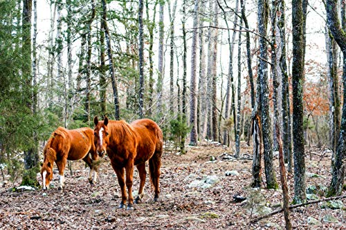 Equine Horse Photography Scene in the Kiamichi Mountains in Southeastern Oklahoma, Smithville, Environment Ecosystem, 5x7