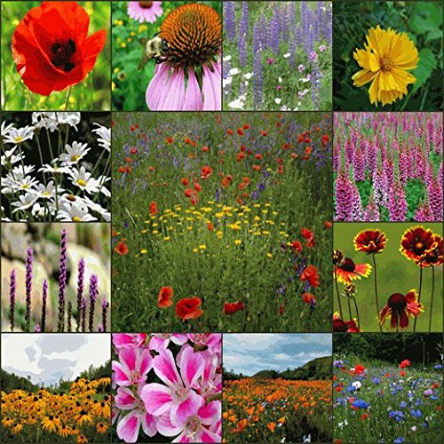 (Deer Resistant Wildflower Seed Mix - 1 Lb)