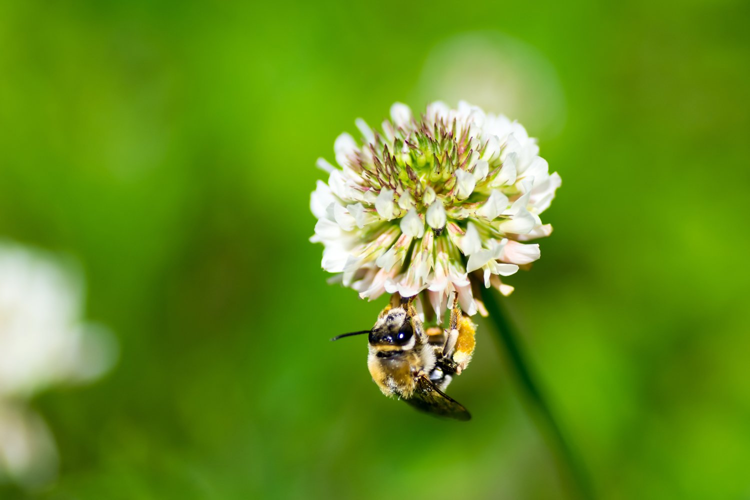 Nature's Seed Mid-West/Mid-Atlantic Honey Bee Pasture Blend, 2000 sq. ft.