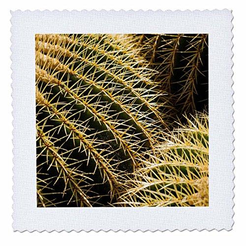 3dRose Danita Delimont - Cactus - Spain, Canary Islands, Guatiza, cactus plant detail - 16x16 inch quilt square (qs_257886_6) by 3dRose