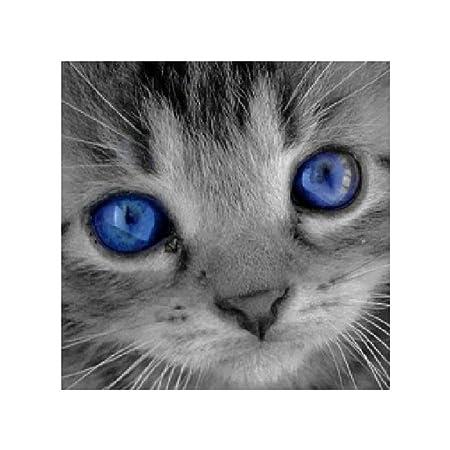 Amazon.com: Potato001 Cute Cat Pattern Frameless 5D Diamond Painting DIY Cross Stitch Home Wall Decor: Home & Kitchen