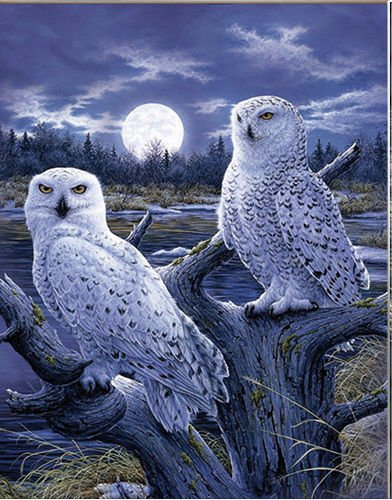 3D Home Wall Art Decor Lenticular Pictures, Owls Collection Holographic Flipping Images, 12x16 inches Animal Poster Painting, Without Frame, Snowy Owl - Snowy Owls