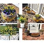 LoveniMen-Artificial-Camellia-Flowers-Plastic-Daffodils-Fake-Plants-Wedding-Bridal-Bouquet-Party-Indoor-Outdoor-DIY-Home-Garden-Verandah-Corridor-Table-Arrangements-Decoration-Yellow-8pcs