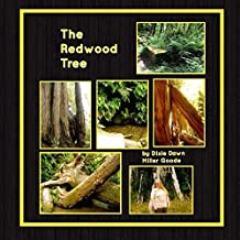The Redwood Tree