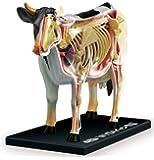 スカイネット 立体パズル 4D VISION 動物解剖 No.03 牛解剖モデル