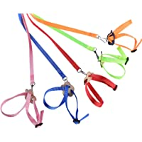 Redcolourful 8 Shape Flying Training Rope Pet Leash for Parrot Bird Hamster Tortoise Lizard Blue The Life of Pets