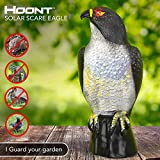 Garden Scarecrow Eagle Decoy by Hoont with Scary...