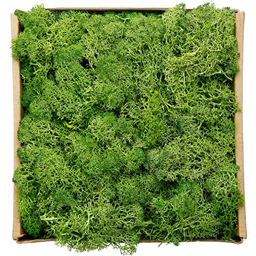 Reindeer Moss Preserved Floral Decorative Moss for Dressing Potted Plants, Fairy Garden, Terrariums and Many Other Crafts, 7 Ounce (Green) (Preserved Plants)