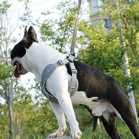 Pet Ajustable Collar Arnés para Perros Fácil De Poner Y Quitar ...