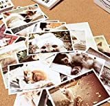 DH CATS postcard set of 30 postcards. Variety Pack of Magazine Post Card