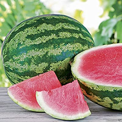 Triple Crown Hybrid Watermelon seed (Seedless) One the best-tasting red variety