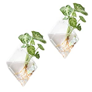 Mkono 2 Pack Wall Hanging Plant Terrarium Glass Planter for Home Decor, Diamond Shape