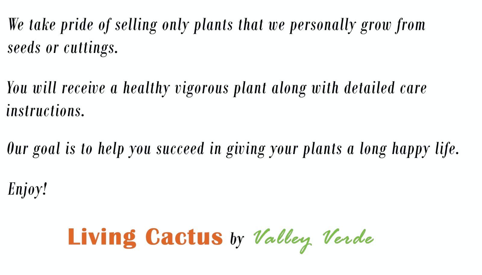 Live Saguaro Cactus Medium - Carnegiea Gigantea by Living Cactus by Valley Verde (Image #1)