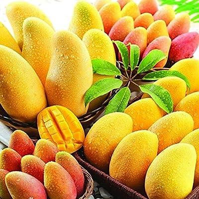 Cheap! 2 (ChinaTaiwan) Jinmang fruit seeds, sweet and delicious, delicious fruit, fruit seeds, home and gardening : Garden & Outdoor