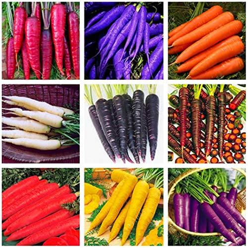 Soteer Seed House – Zanahorias orgánicas 'Rainbow Mix' F1 Zanahoria Mezclar Semillas Lechuga Vegetal Tubo Semillas de…