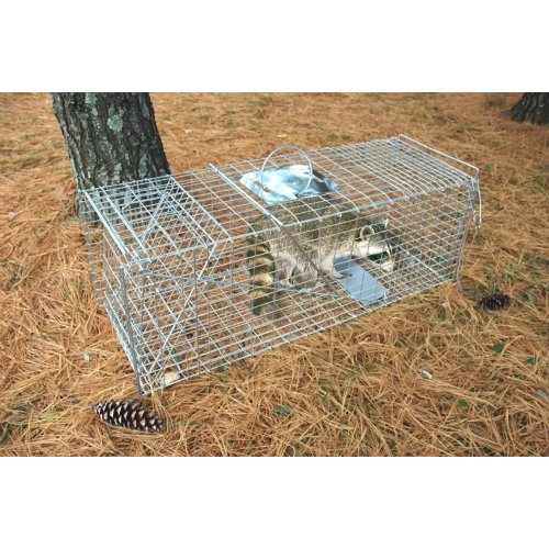 Pet Trex Zinc Live Animal Trap Racoon Skunk Cat Traps, 37""